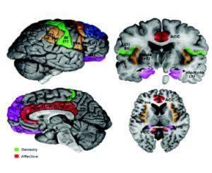 Multitasking, kanban & neuroscience