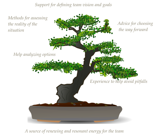 Kanban and lean consulting & coaching helps achieve the elegance and balance of a bonsai tree